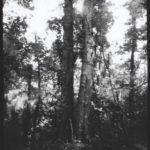 Silver Gelatin Print From Pinhole Paper Negative joez@joe-ziolkowski.com
